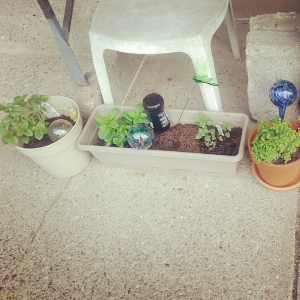 herbgarde