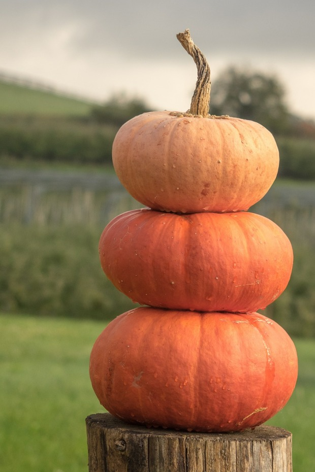 pumpkins-504120_1280
