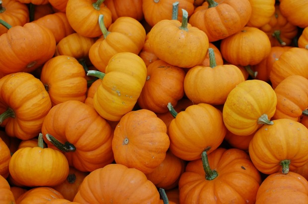 pumpkins-379869_1280