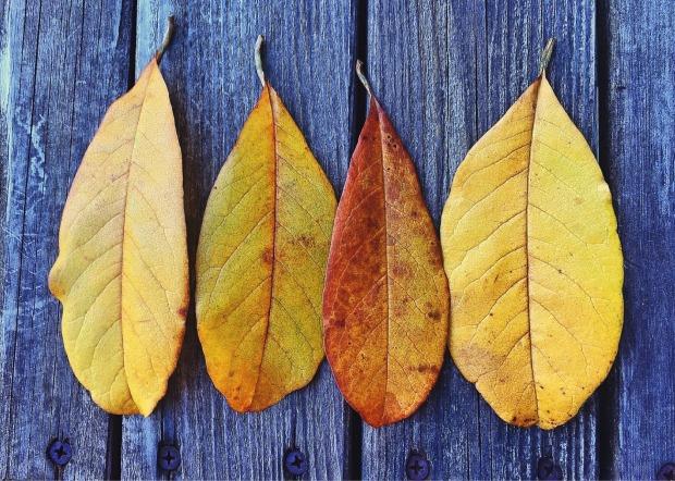 fall-1034494_1920