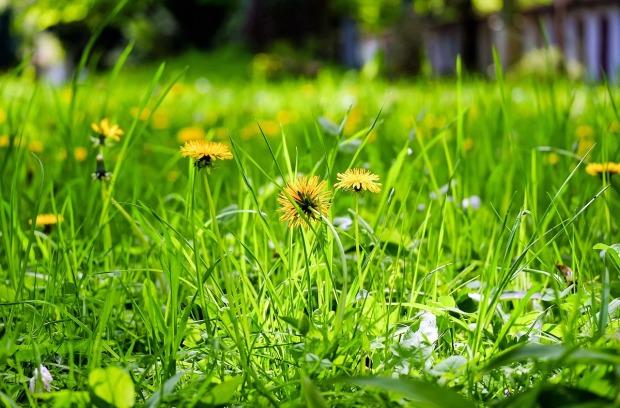 flower-meadow-1344494_1280