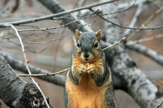 squirrel-241521_1920